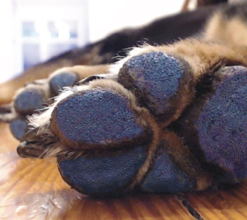 Paw Pads For Dogs