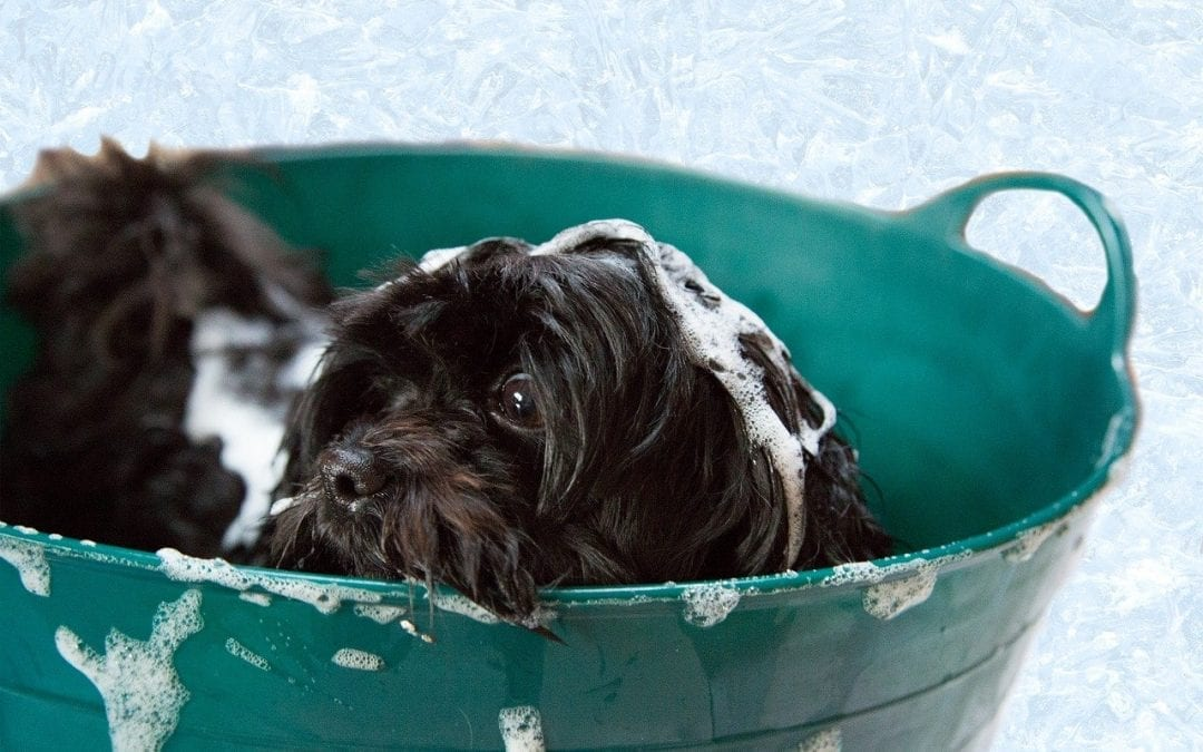 Is Grooming Safe for Senior Dogs with Health Issues?